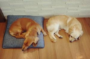 犬ちゃん_191105_0361