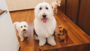 犬ちゃん_191105_0365