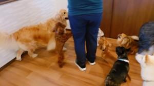 犬ちゃん_191105_0366