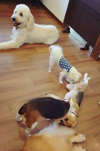 犬ちゃん_191109_0371