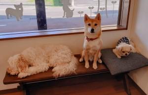 犬ちゃん_191109_0372