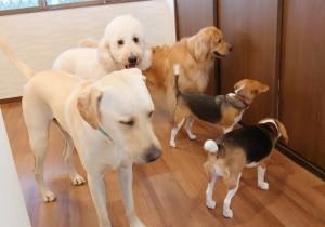 犬ちゃん_191109_0374