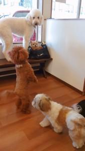 犬ちゃん_191109_0384