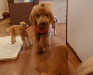 犬ちゃん_191126_0469