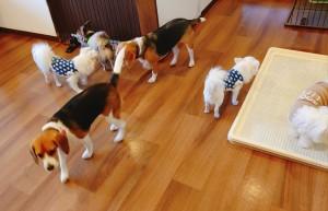 犬ちゃん_191127_0477