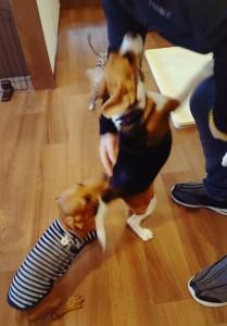 犬ちゃん_191127_0479