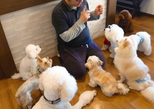 犬ちゃん_191201_0485
