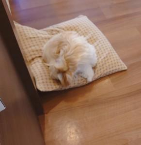 犬ちゃん_191201_0488