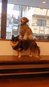 犬ちゃん_191202_0496