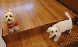犬ちゃん_191202_0499