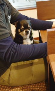 犬ちゃん_191202_0500