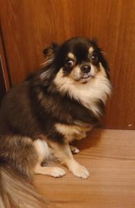 犬ちゃん_191202_0501