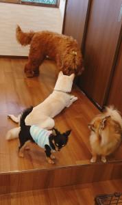 犬ちゃん_191204_0505