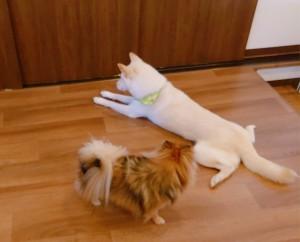 犬ちゃん_191204_0506