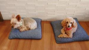 犬ちゃん_191204_0511