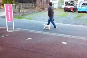 犬ちゃん_191204_0513
