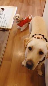 犬ちゃん_191205_0515