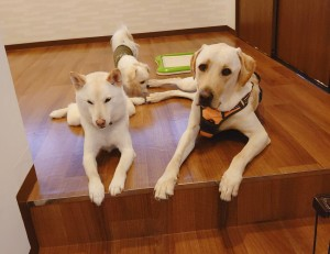 犬ちゃん_191225_0619