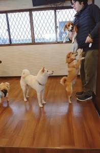 犬ちゃん_191225_0620