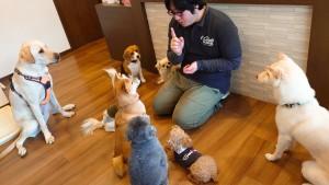 犬ちゃん_191225_0622