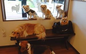 犬ちゃん_191225_0624