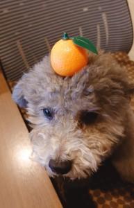 犬ちゃん_200108_0627
