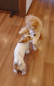 犬ちゃん_200112_0633