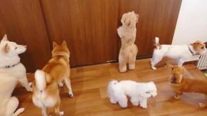 犬ちゃん_200112_0634