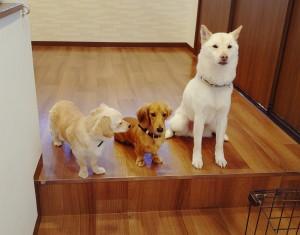 犬ちゃん_200112_0635