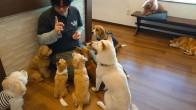 犬ちゃん_200112_0638