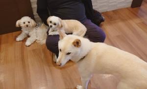 犬ちゃん_200112_0641
