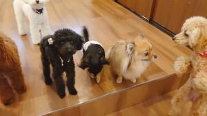 犬ちゃん_200114_0643
