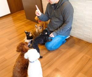 犬ちゃん_200114_0644