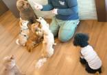 犬ちゃん_200223_0841
