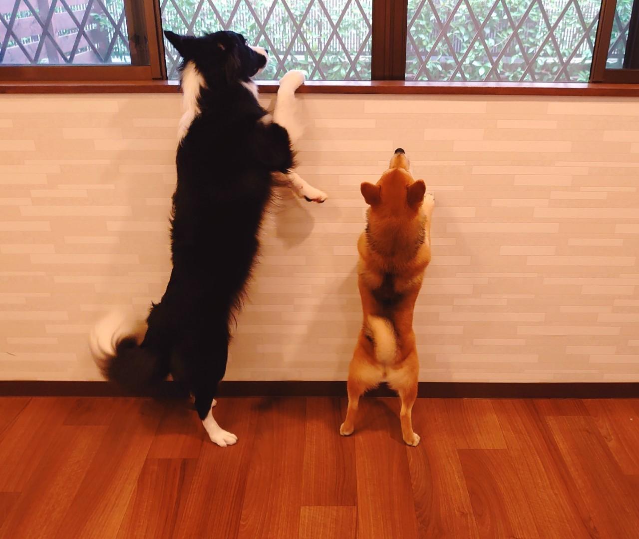 二人で外を見たいけど、さくらちゃんは身長がたりず。